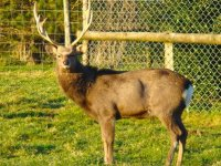 Visit the deer.