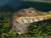 Visit the reptiles.