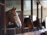 Visit our stables at Hill Farm Riding & Driving Centre