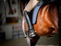 Take lessons with Hill Farm Riding & Driving Centre