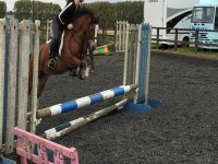 Showjumping lesson in Poppyfield Equestrian.