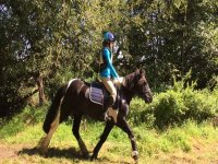 Hacking with Poppyfield Equestrian.