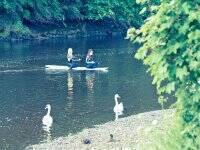 Enjoy the Amble's views from a paddle board