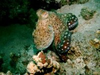 Beauty in the underwater world
