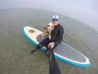 Dogs also do SUP