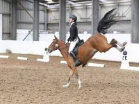 Dressage at Quob Stables Equestrian Centre
