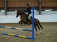 Showjumping at Quob Stables Equestrian Centre