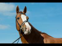 Meet our beautiful horses!