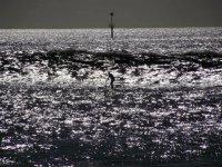 SUP sea