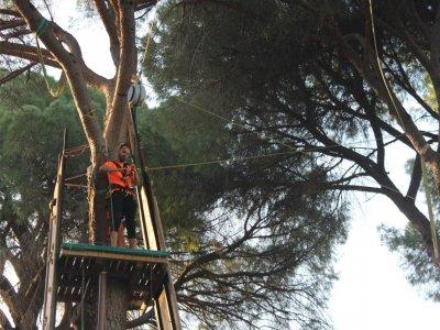 Bosque Suspendido