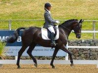 Professinal Horse riding!