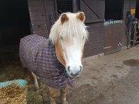 Meet our ponies!