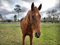 Meet everyone at Cavendish Bridge Equestrian Centre
