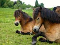 Meet us at Edinburgh University's Exmoor Pony Trekking Society !