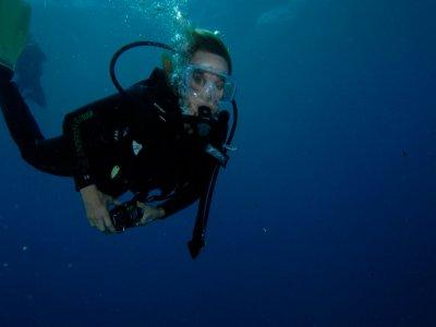 Blue Turtle Diving