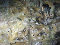 We have a variety of creative climbing walls