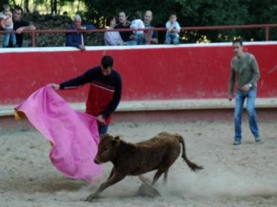Reta de Casta Navarra