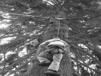 Have a go at tree climbing