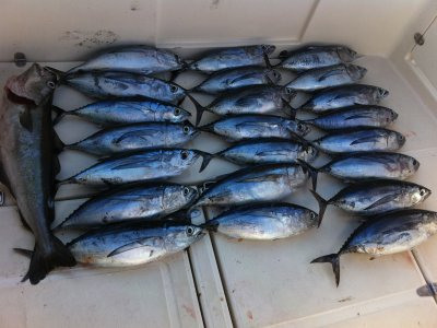 Pesca de Altura Cantabria