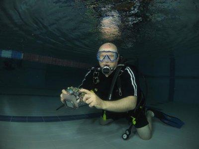 sea urchin divers