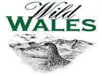 Wild Wales Climbing