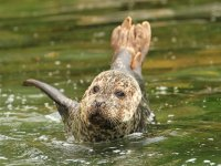 Lake seal