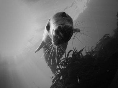 Farne Island Divers