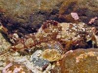 Sea Scorpions