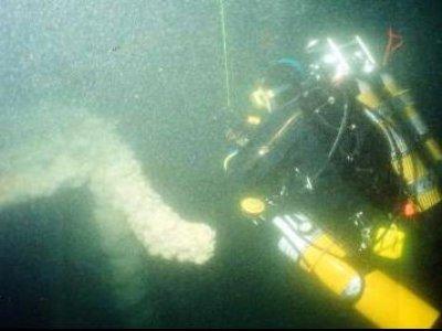 Samuel Irvin Diving
