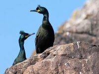 Boat Trip Cornwall bird wildlife