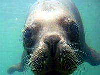Boat trip cornwall seals