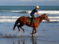 Horse Riding along the beach