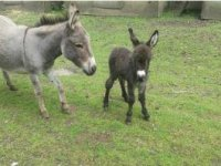 Donkeys are awesome.