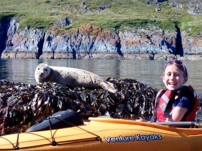 Wild Seals on The Mew Stone