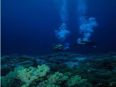 Shoal Divers