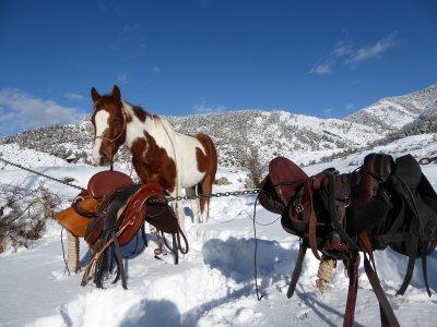 Cavalls Guiabosc Baridà