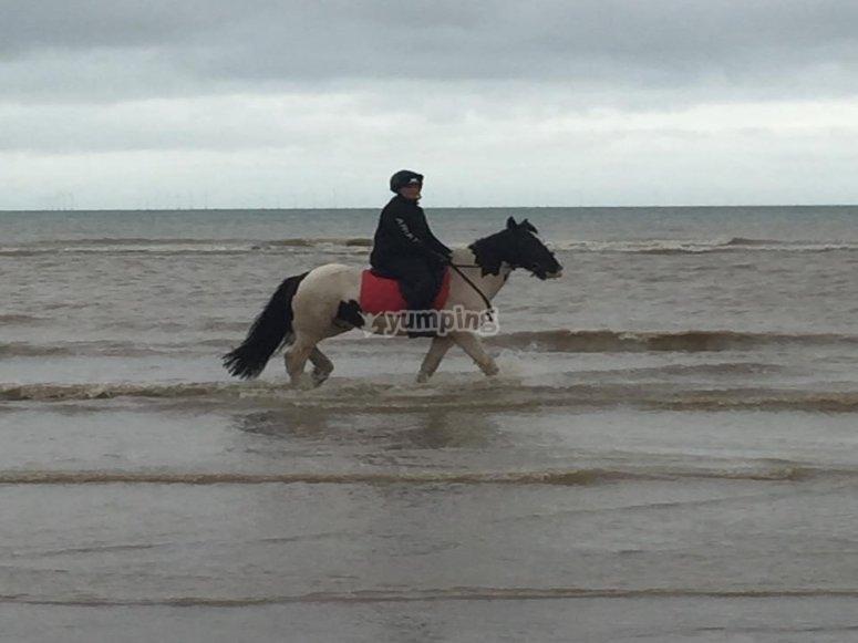 Barton Field Farm Equestrian Centre Horse Riding
