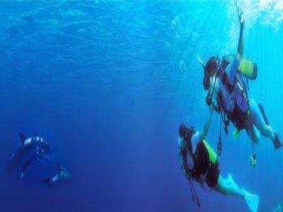 Ocean Turtle Diving