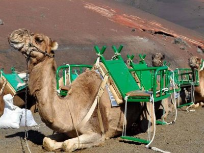 Renta Guides Paseos en Camello