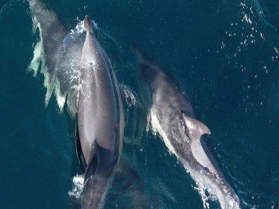 Mater Museoa Avistamiento de Cetáceos
