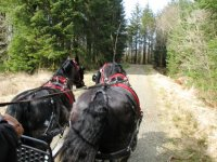 Carriage driving in Ruby Country.