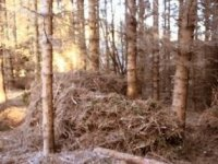 Woodland locations