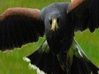 Great birds of prey.