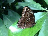 Butterflies are pretty.
