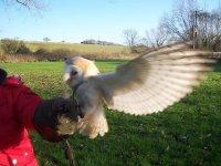 Jessie, the Barn Owl