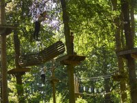 Tree-top forest adventure