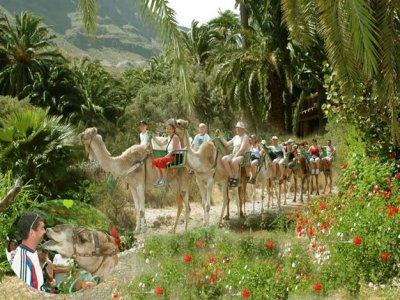 Camel Safari Park - La Baranda