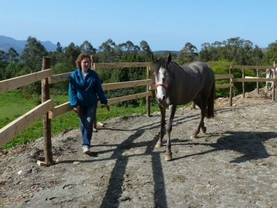 Horse riding experience + lunch