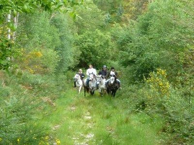 Horse ride in Ponte Segado + snack, 3 h