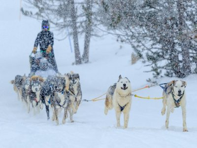Roc Roi Andorra Mushing